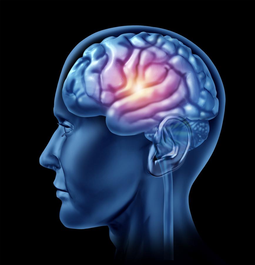 Senior Care in Studio City CA: Promoting Brain Health