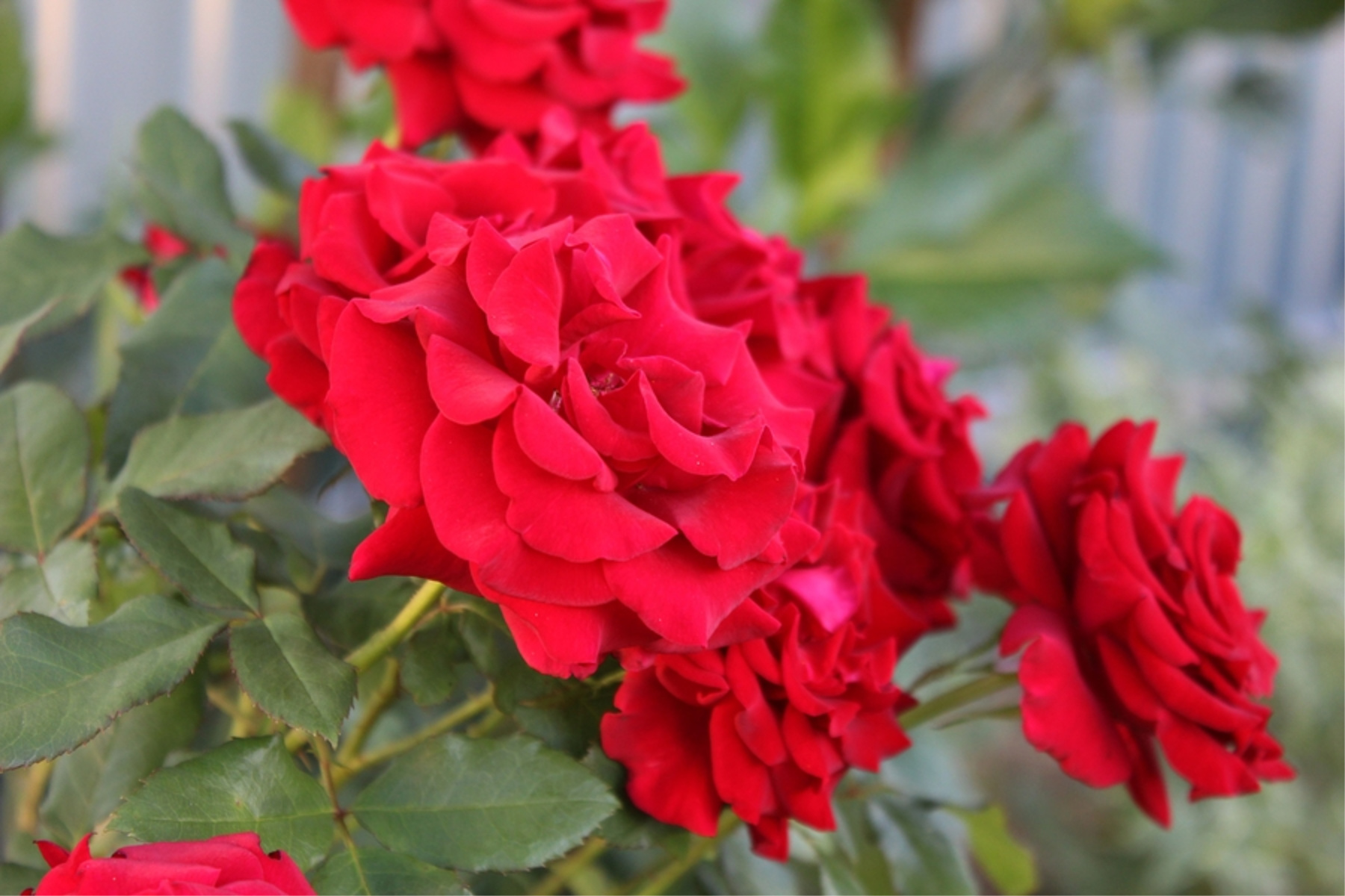 Elderly Care in Silver Lake CA: Valentine's Day Gifts